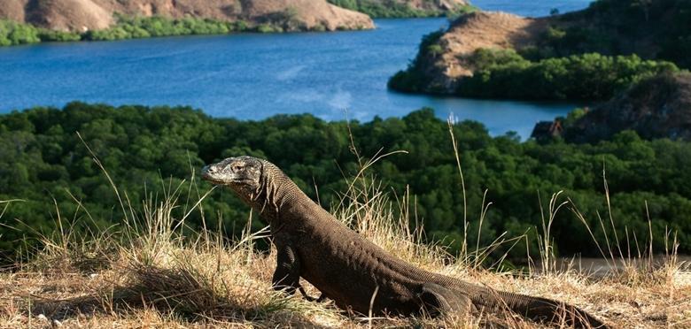 Paket Wisata Pulau Komodo 4 hari 3 malam